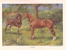 1923 ART Print  Horses HACKNEY PONIES IN PASTURE PONY