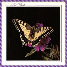 Carte Postale - Papillon