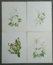 Set of 4 Vintage Floral Textured Art Prints (Canada) by Rozy 40x50cm