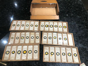 Antique Victorian Microscope Insect Slides Specimens in Case @  1880 BROADHURST