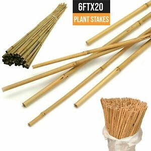 20 x 6FT Strong Heavy Duty Bamboo Canes Garden Thick Quality Plant Support Poles