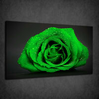 BEAUTIFUL ROSE FLOWER DEW DROPS MANY COLOURS BOX CANVAS PRINT WALL ART PICTURE