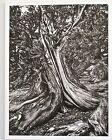Sebastiao Salgado-Ancient Bristlecone Pine Forest CA USA Photo Reprint 13x10