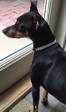 "X Small Black Collar With Clear Crystal Rhinestone Dog Collar Fits 8-10"" Necks"
