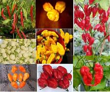 #9 SUPER HOT Pepper Seed Collection-Red Savina,SB7J,Peach T.S,Super Datil,6 More
