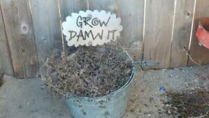 Grow Damn It Metal Garden Stake