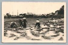 Rice Harvesting—Philippines? Rppc Antique Se Asia Photo—Thailand? 1910S