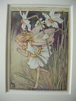 Vtg FLOWER FAIRIES PRINT & MOUNT Narcissus Fairy CICELY MARY BARKER c1930's