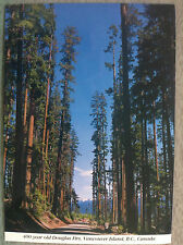 400 Year Old Douglas Firs Vancouver Island BC Canada Vintage Postcard