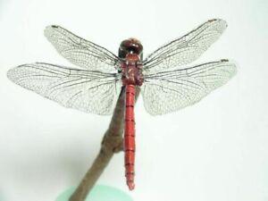 Yujin Sympetrum meadowhawk dragonfly Bug Insect PVC Figure Figurine Model Rare