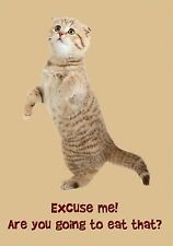 MAGNET Humor Animal Cat Kitten Question Excuse Me Are You Going to Eat That