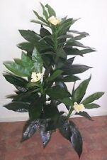 Artificial silk Frangipani plant with flowers P32 140cm -SPECIAL CLEARANCE PRICE