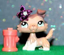 💚100% Authentic Littlest Pet Shop Lps Collie Dog puppy #1330 Euc blue Eyes 💚