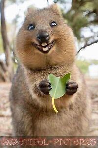 Süsses Wombat Foto - Lustiges Wombat Foto - Hochglanz - Größe 10x15 - Farbe