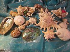 Lot Of Sea Shells Beautiful