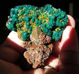 "Dioptase with Mimetite ""tree"". Ntola mine Republic Congo 39 grams"