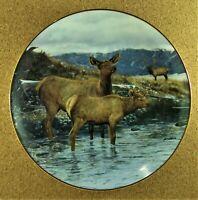 SUDDEN ALERT Plate High Country Pride Cows & Bull Elk Bruce Miller Danbury Mint