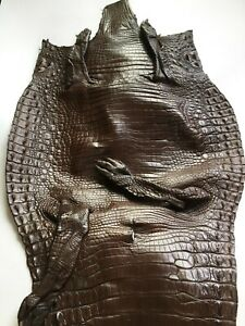 Crocodile Skin Leather Hide Exotic Skin Craft Supply Belly Brown SZ 46cm #CR-11