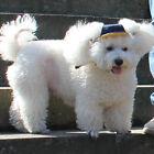 Dog Sport Baseball   Denim Visor Hat Sun Bonnet Chin Strap   for Outdoor