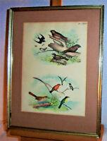 1878 Antique Color Lithograph American BIRDS Hummingbird Swallow Ornithology