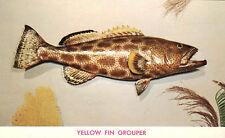 Yellow Fin Grouper Coastal Fish 1955 Teich Postcard Al Pflueger