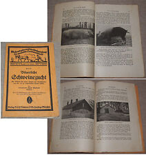 Hans GUTBROD agricoltori allevamento suino Weihenstephaner i font raccolta 1925