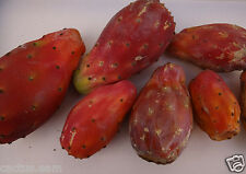 25 RED Opuntia ficus indica Seeds, Nopal, Tuna Roja, Cactus Prickly Pear Fruit