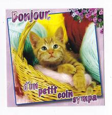 CHAT Chaton carte postale n° 6028/56 Bonjour, d'un petit coin sympa