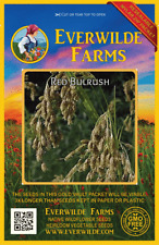 2000 Red Bulrush Native Grass Seeds - Everwilde Farms Mylar Seed Packet