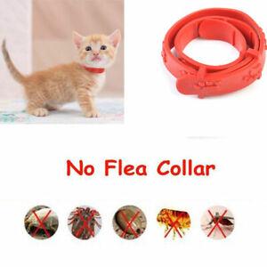 Cat Kitten Adjustable Pet Collar Neck Strap Remedy Anti Flea Mite Acari Tick NEW
