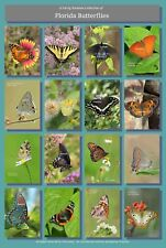 Butterflies of Florida Poster Hi-Res 13X19 A3+ Butterfly Insects Lepidoptera