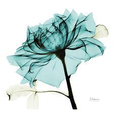 Teal Rose 2 Art Poster Print by Albert Koetsier, 13x13
