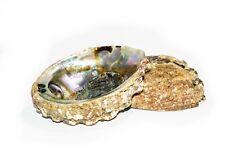 """Pink Abalone Sea Shell One Side Polished Beach Craft 4"""" - 5"""" (2 pcs) #JC-11"""