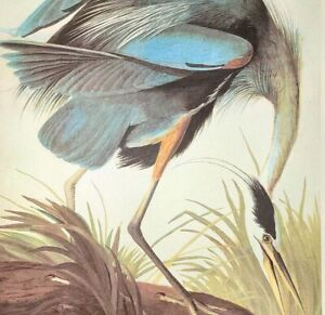 John James Audubon Birds GREAT BLUE HERON Original Vintage Book Plate Art Print