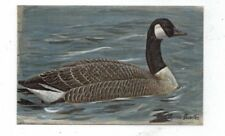 Antique Linen Post Card Canada Goose signed by Louis Aggasiz Fuertes