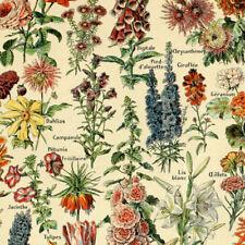 Print Vintage Poster Floral Garden Poster Illustration Flowers Botanical