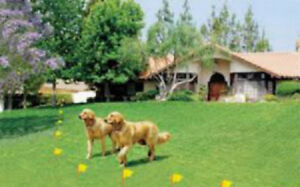 Smart Dog In-ground Pet Fencing System -300m of underground wiring normally $200