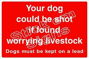 Your dog could be shot if found worrying livestock Dogs on lead  COUN1068