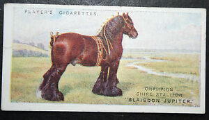 Shire Horse  Champion Stallion   Original 1915 Colour Card  CAT J