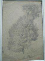 Louis Alexandre DUBOURG (1821-1891) arbre rare grand fusain et crayon