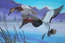HARRY HAYES-PA Realist-Original Signed Acrylic-Male & Female Redhead Ducks