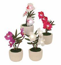 illuminé Fleurs artificielles Orchidée avec petites Lampes A LED Hauteur 17 cm