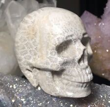 CORAL FOSSIL Crystal Skull! Realistic Carving Ancient 20 Million Year Old Quartz