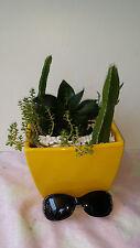 cactus minature garden