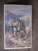 A&C Black Postcard - Natural History Animals series - The Tiger