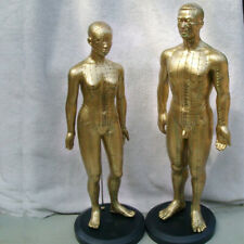 Human Model Male/Female Acupuncture Point Meridians Model Medical Education Tool