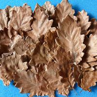 75/150/300 Eichenblätter Quercus robur Eichenlaub Garnelen Krebse Welse Schnecke