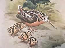 Don Eckelberry ( Woodcock and Young ) signed lithograph print series 2