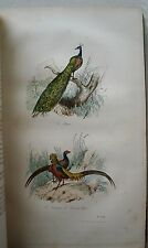 Oeuvres BUFFON T 5 2è partie Les Oiseaux 2 FLOURENS Garnier 1855