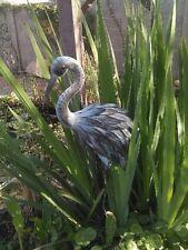 1 white Water Iris, Pond Plant & Free Bog plant